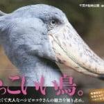 高橋ひとみ 鳥に似ている旦那。しかもハシビロコウなんです。/ 寺山修司の恋文